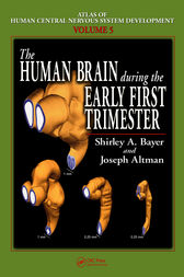 The Human Brain During the Early First Trimester by Shirley A. Bayer