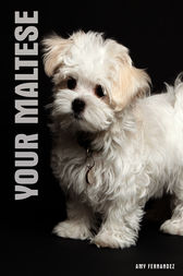 Your Maltese by Amy Fernandez