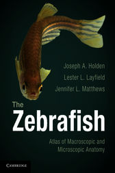 The Zebrafish by Joseph A. Holden