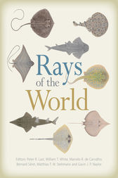 Rays of the World by Peter Last
