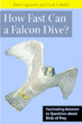 How Fast Can A Falcon Dive? by Peter Capainolo